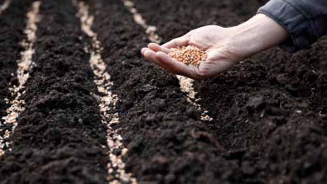 Посев кормовых трав